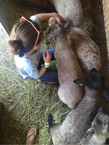 Petting zoo3